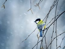 Bird sit on a branch in winter forest in the snow. Nice bird the bird sit on a branch in winter forest in the snow Royalty Free Stock Photos