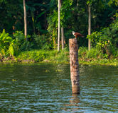 The bird sits on a log standing in water Royalty Free Stock Image