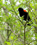 Bird Sitting. Bird perched on a branch in a tree outdoors Royalty Free Stock Images