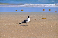 Bird sitting alone on the beach Stock Photos