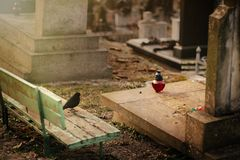 Free Bird Sitting At Old Stone Tomb On Grave On Ancient  Cemetery Royalty Free Stock Photos - 114491718