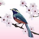 Card design, bird and flower Stock Image