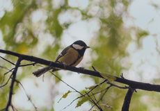 Bird sitting on a branch Stock Photography