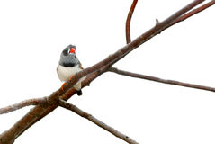 Bird sitting on a branch. Royalty Free Stock Photos