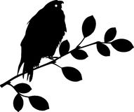 Bird sitting on branch Royalty Free Stock Image