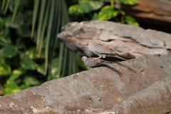 Bird sitting on branch in Stuttgart in germany. stock image