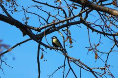Bird sitting on the branch of a tree. stock images