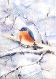 Bird sitting on a branch Stock Image