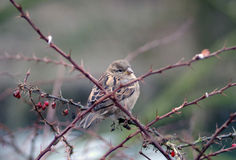 Bird. A bird sitting in branches Stock Photo