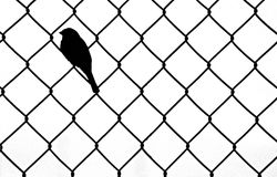Bird Sitting within Chain link fence Royalty Free Stock Image