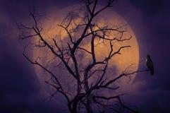 Bird sitting on dead tree, Halloween background Royalty Free Stock Image