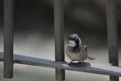 Bird sitting on the fence stock images