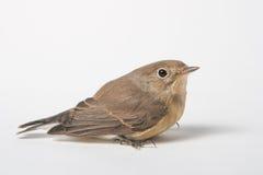 Bird. The bird sitting in the nest stock photos