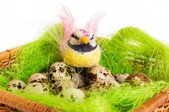 Bird sitting in a nest basket with quail eggs Royalty Free Stock Images