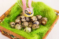 Bird sitting in a nest basket with quail eggs Royalty Free Stock Photo