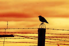 Bird sitting on prison fence Stock Image