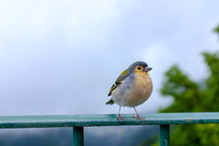 Bird sitting on a railing Stock Images