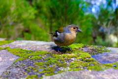 Bird sitting on a railing Royalty Free Stock Photography