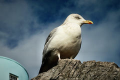 Bird Sitting on Rock Stock Images