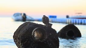 A bird sitting on a rock on the shore of the Red Sea stock video footage