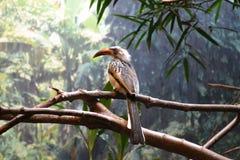 Bird. Sitting on tree in the Barcelona Stock Image