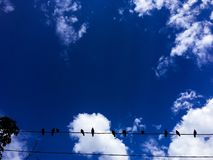 Bird sitting on wire against blue sky background. Bird sitting on wire against sky background Royalty Free Stock Photography