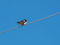 Bird sitting on a wire Royalty Free Stock Photo