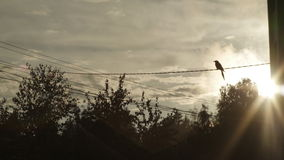 Bird sitting on wires in the sun royalty free stock photo