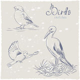 Bird sketch Stock Images