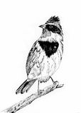 Bird sketch. By black pen,on paper Royalty Free Stock Photography