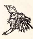 Bird sketch Royalty Free Stock Images