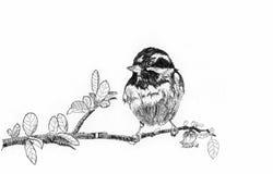 Bird sketch. On paper white black Stock Image