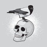 Bird on Skull Royalty Free Stock Images