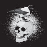 Bird on Skull Stock Photography