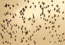 Bird in the sky Stock Photos
