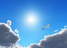 Bird in the sky Stock Photography