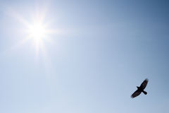 Bird in the sky. Bird in the blue sky flying over the sun Royalty Free Stock Image