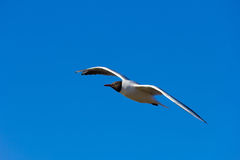 A bird in the sky Royalty Free Stock Photos