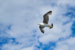 Bird, Sky, Fauna, Beak stock photography