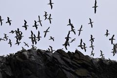 Bird, Sky, Flock, Animal Migration royalty free stock photos