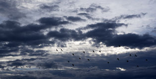 Bird in the sky Stock Images