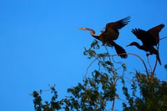 Bird on the sky. In Nakhonsawan province of Thailand Royalty Free Stock Image