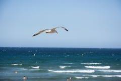 Bird and sky  Royalty Free Stock Image