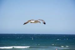 Bird and sky  Royalty Free Stock Photos