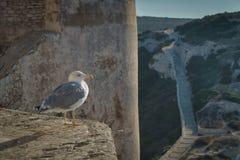 Bird, Sky, Seabird, Beak stock image