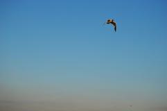 А bird in the sky royalty free stock image