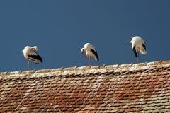 Bird, Sky, Stork, Beak stock photography