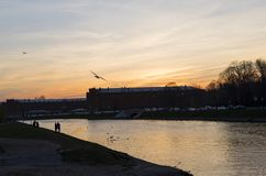 Bird in the sky at sunset over the river in the city royalty free stock photos