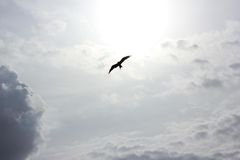 Bird at the Sky Under Heavy Clouds during Daytime Stock Photos