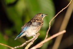 Bird sleeping in the rainforest Stock Photos